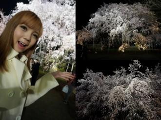 Blog -Night Sakura-001